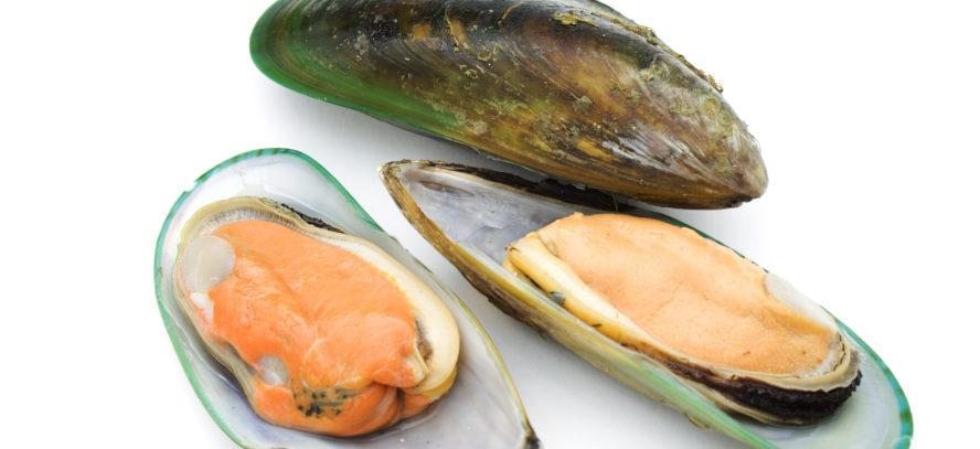 English vocabulary: mussels